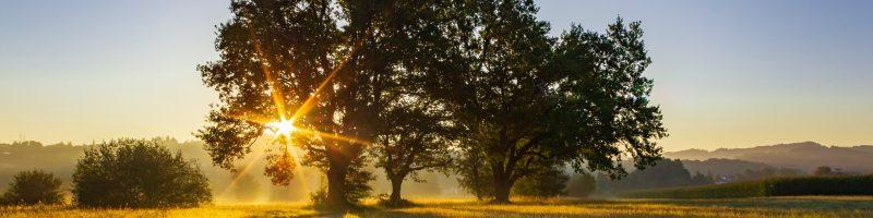 Sun rising behind a tree